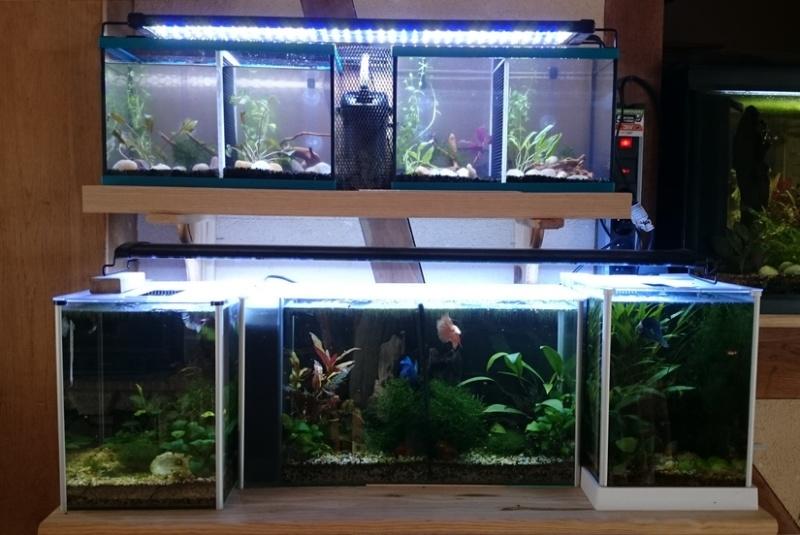 aquarium 10 litres quel filtre. Black Bedroom Furniture Sets. Home Design Ideas