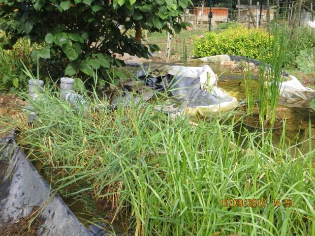 Test  Lagunage épurateur de nitrates sans substrat