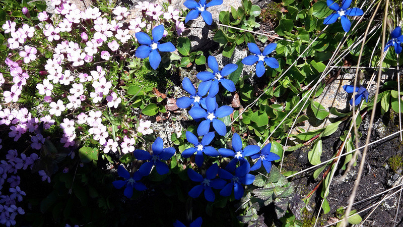 fleur_10