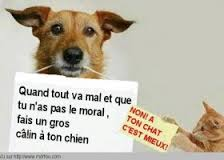 trait d'union - chiens