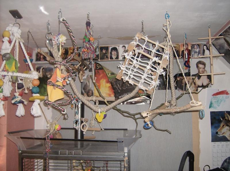 paco et kiwi mes calopsittes page 2 oiseaux forum animaux. Black Bedroom Furniture Sets. Home Design Ideas