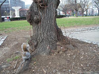 squirr12.jpg