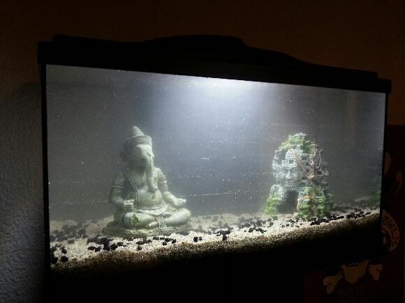 Aquarium achet forum aquarium for Quoi mettre aquarium poisson rouge