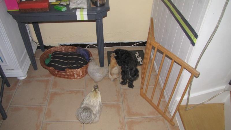 Ma poule rentre dans la maison que faire - Ma maison est humide que faire ...