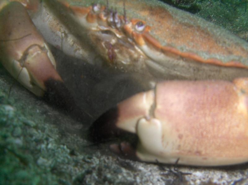 Krabbe Klo