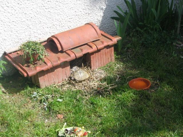 Maison pour tortue hermann ventana blog - Construire une maison en terre ...
