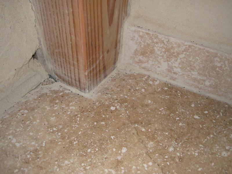 Invasion insecte maison paille - Insecte dans la maison ...
