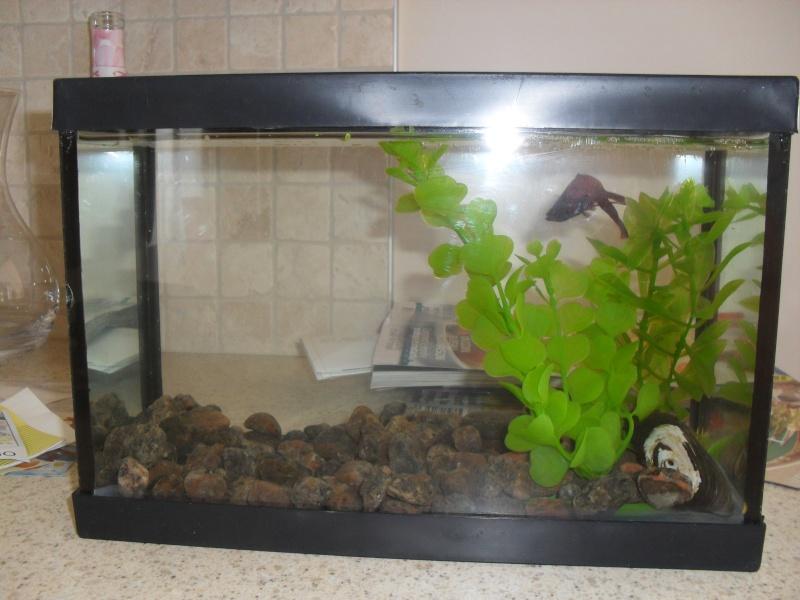 Mes 2 petits bac a betta for Aquarium plastique