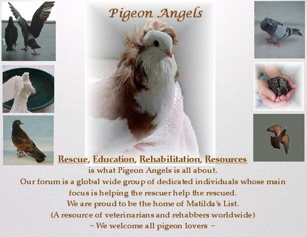 Pigeon Angels