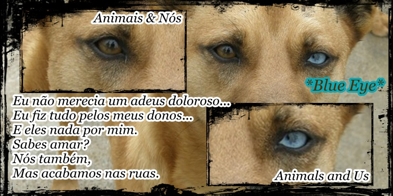 Animais & Nós