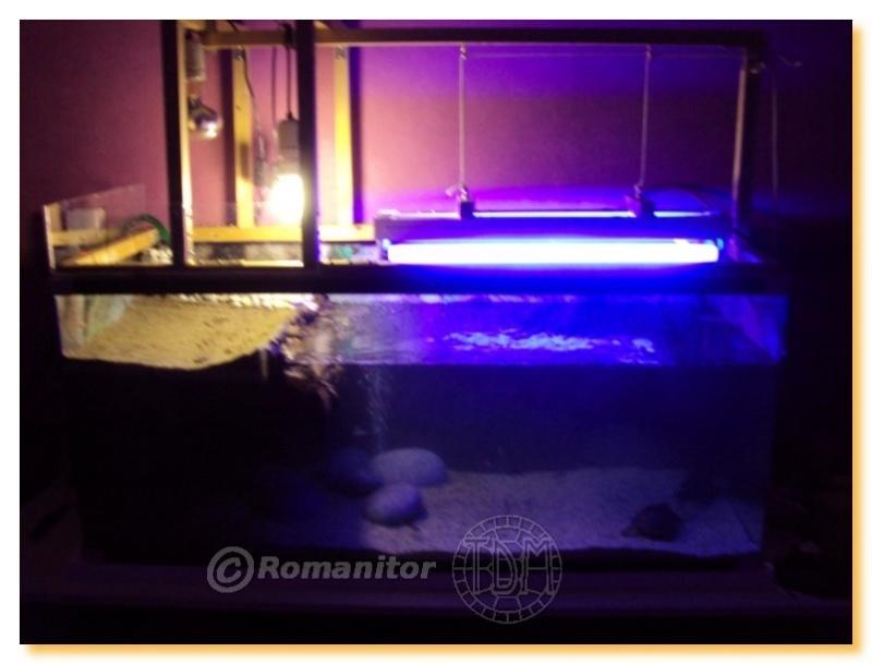 lampe chauffante pour tortue d'eau