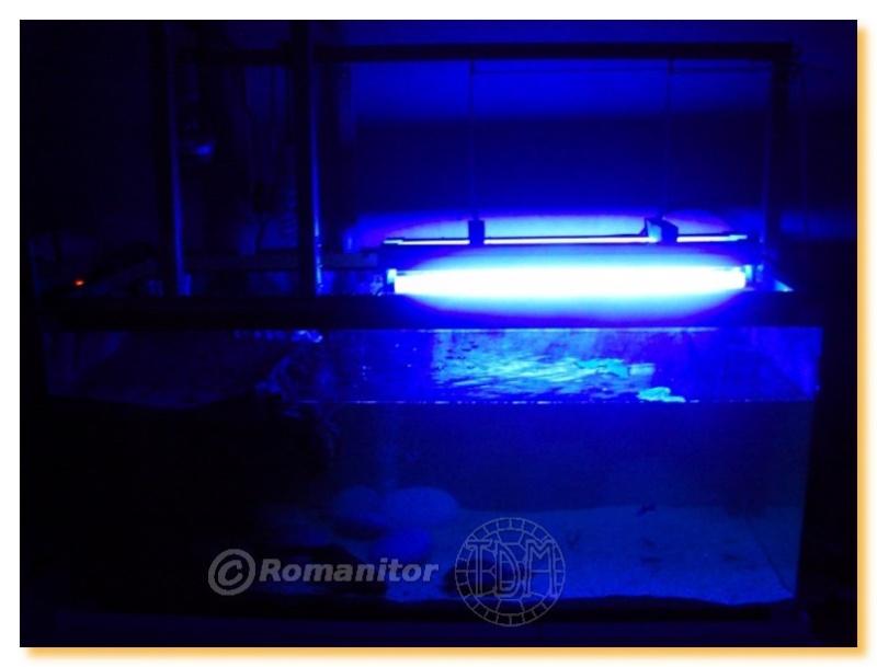 Exemples d 39 aquariums pour tortues aquatiques - Lampe chauffante tortue ...