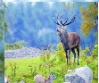 المملكة الحيوانية والنباتية