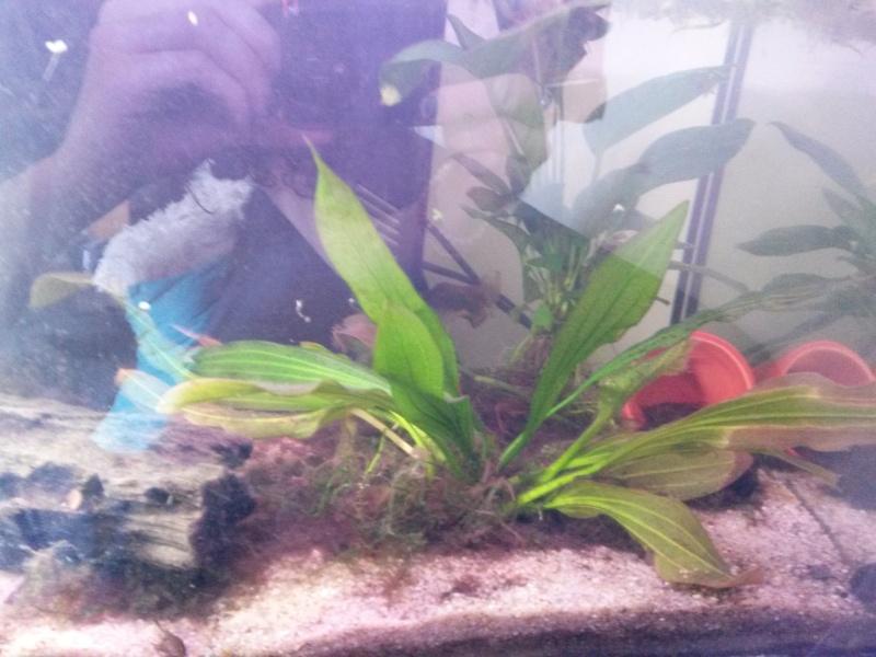 comment nettoyer le fond de mon aquarium 28 images je ne vois pas le fond de mon aquarium. Black Bedroom Furniture Sets. Home Design Ideas