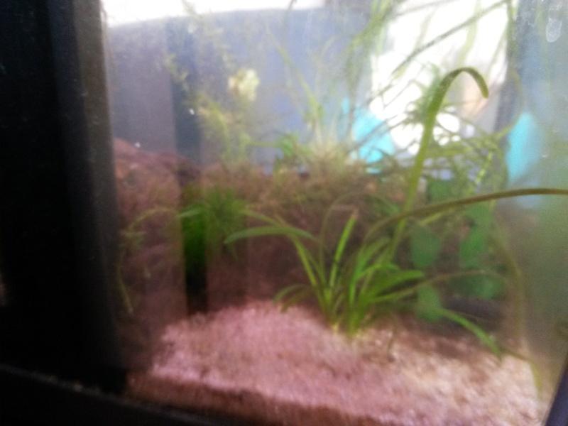 nettoyer le fond de l aquarium 28 images un aspirateur maison pour aquarium bas prix avec. Black Bedroom Furniture Sets. Home Design Ideas