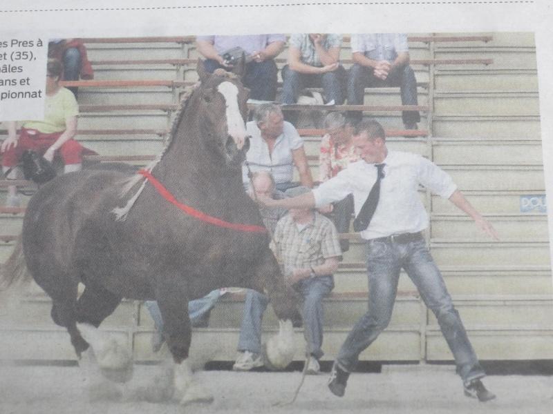 Les chevaux de trait page 2 for Combien coute une piscine desjoyaux