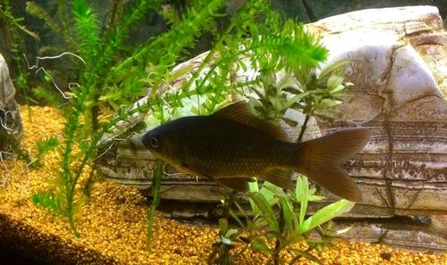 Recherche bassin pour accueillir poisson rouge 92 for Recherche poisson rouge