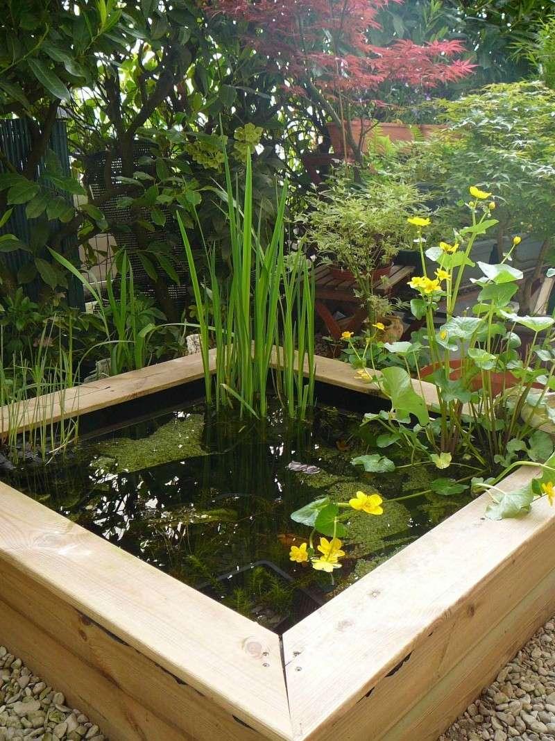jardin aquatique sur terrasse en ville. Black Bedroom Furniture Sets. Home Design Ideas