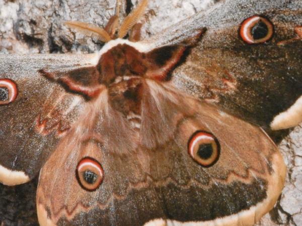 Fil et papillons page 9 for La vie claire la ciotat
