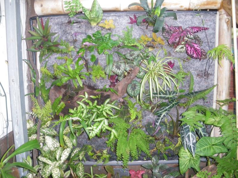 Mur v g tal exterieur for Plantes mur vegetal exterieur