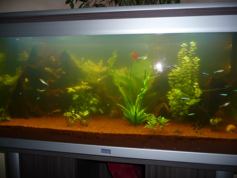 aquarium rouge aquarium eau douce trouble. Black Bedroom Furniture Sets. Home Design Ideas