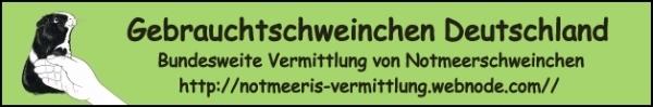 Gebrauchtschweinchen Deutschland