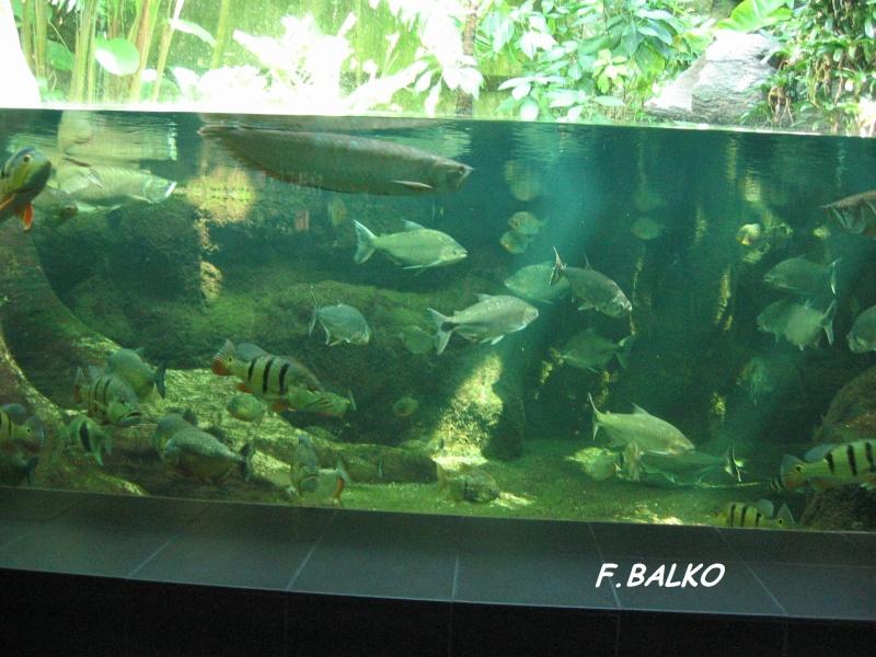 aquarium berlin eau douce