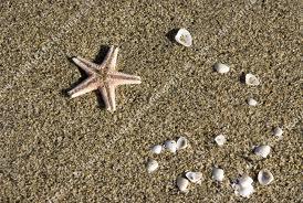 Une matinée à la plage dans MOMENT DE VIE atoile10