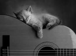 Un amour de chat dans MES ANIMAUX DE COMPAGNIE chat_t10