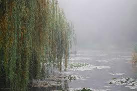 La brume dans mon rêve dans MOMENT DE VIE images20