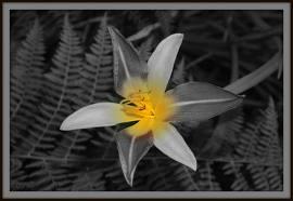 Une fleur de paradis dans MOMENT DE VIE images24