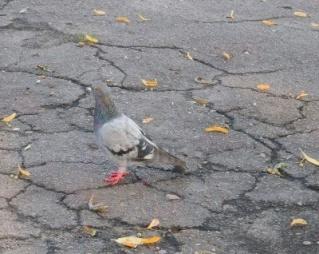 La pluie sur la vie dans MOMENT DE VIE pigeon10