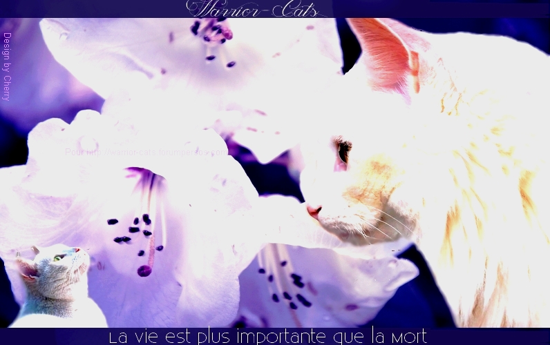 ♥ Warrior-Cats♥