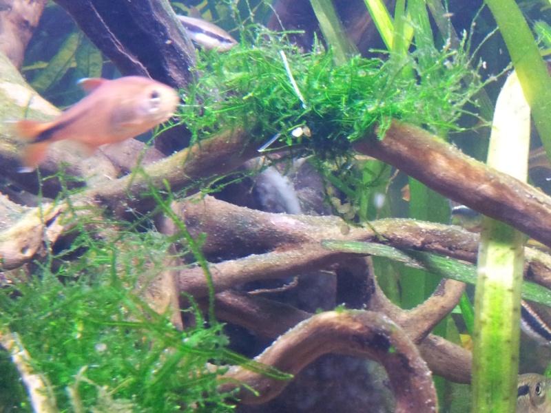Racine aquarium mousse blanche for Racine aquarium