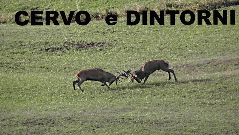 FORUM NATURALISTICO. Il CERVO e gli Ungulati, Fauna e Flora della Nostra Italia