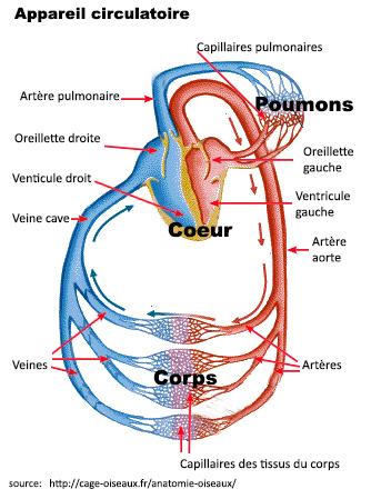 Les helminthes et le système nerveux