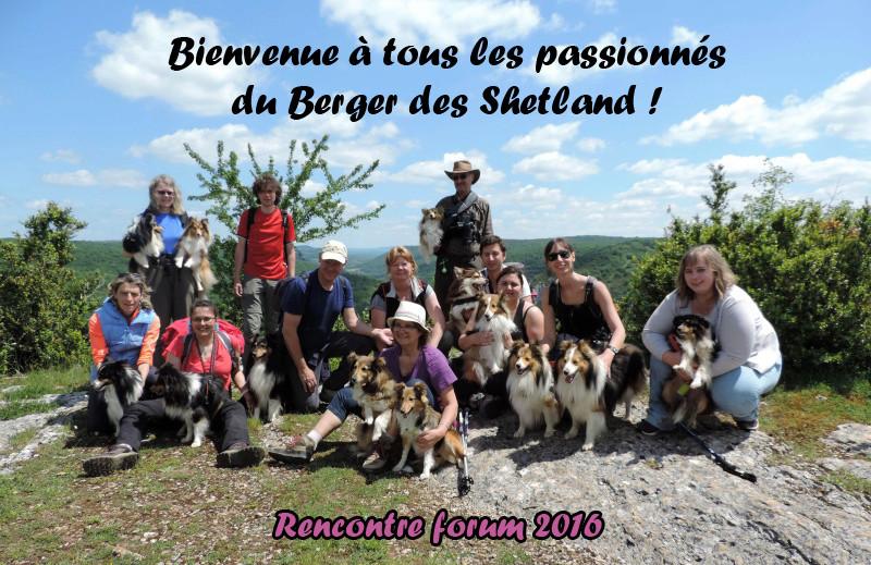 Bergers des Shetland