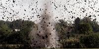 Terrains d'explosifs