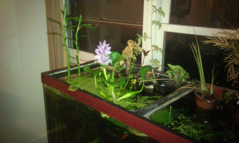 how to make a self sustaining ecosystem
