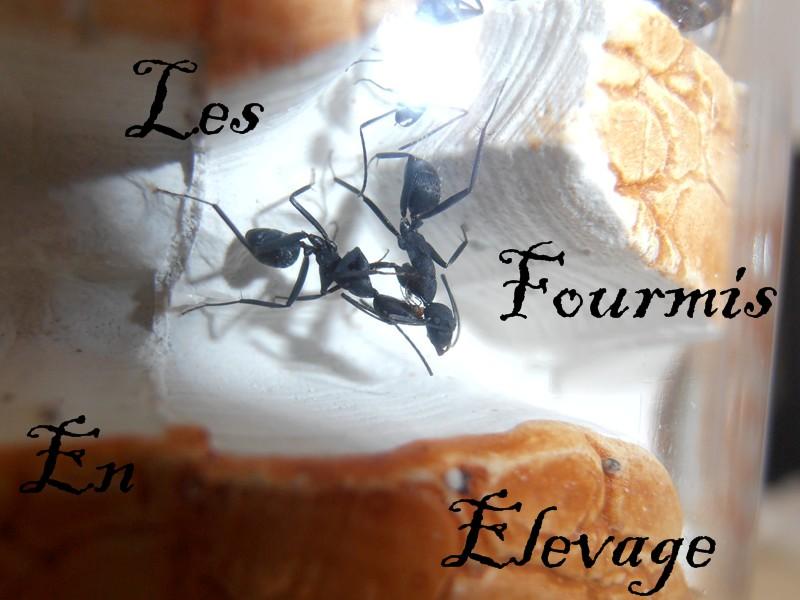 nourriture fourmis elevage