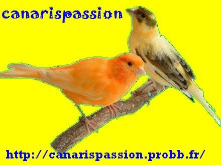 Canaris passion