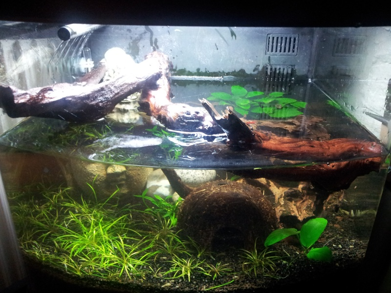 Mon bac sera nano cube 60 pour mes futurs cynops orientalis for Poisson aquarium 60l