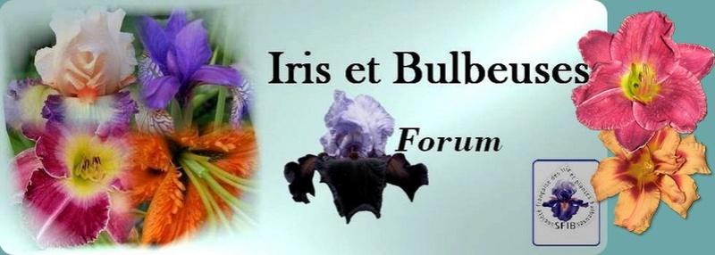 Iris et Bulbeuses