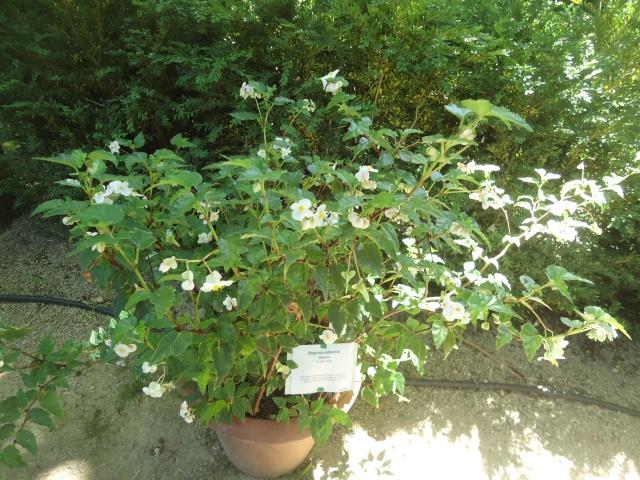 Jardin aux plantes parfum es la bouich re limoux 11 for Jardin aux plantes