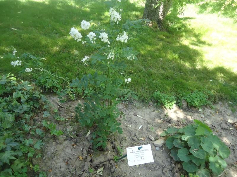 Jardin aux plantes parfum es la bouich re limoux 11 page 2 for Jardin aux plantes