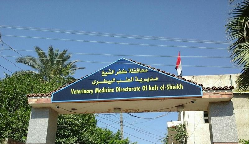 مديرية الطب البيطري بكفر الشيخ