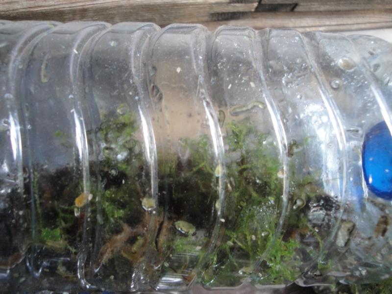 cultiver la mousse en terrarium page 2. Black Bedroom Furniture Sets. Home Design Ideas
