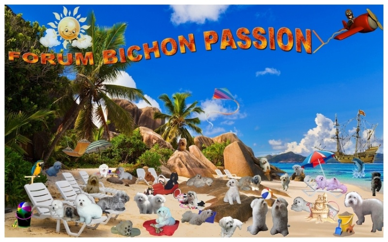 Forum Bichon Passion
