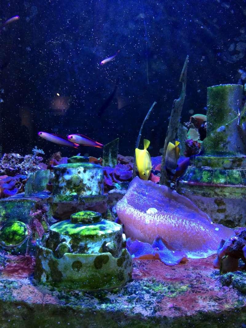 sortie en famille aquarium seaquarium le grau du roi. Black Bedroom Furniture Sets. Home Design Ideas