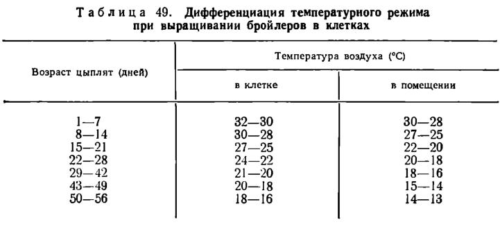 Температура для бройлеров в домашних условиях